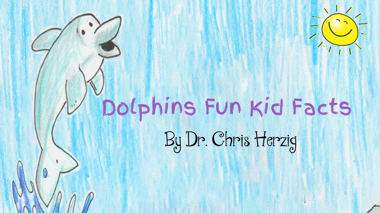Dolphins Fun Kid Facts marine biology