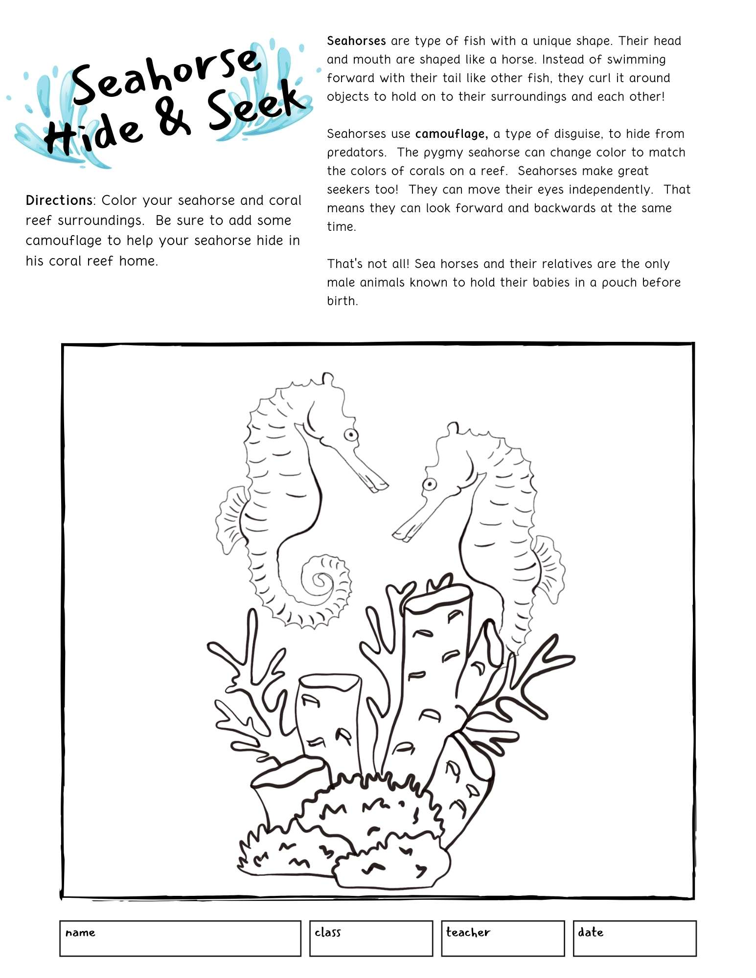seahorse printable for kids